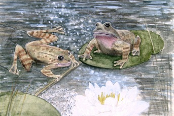 It's a Frogs Life! - Frogs on water lily pads