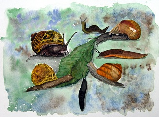 A Gastropod Party - Slugs and snails