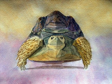 The Old Timer - Tortoise